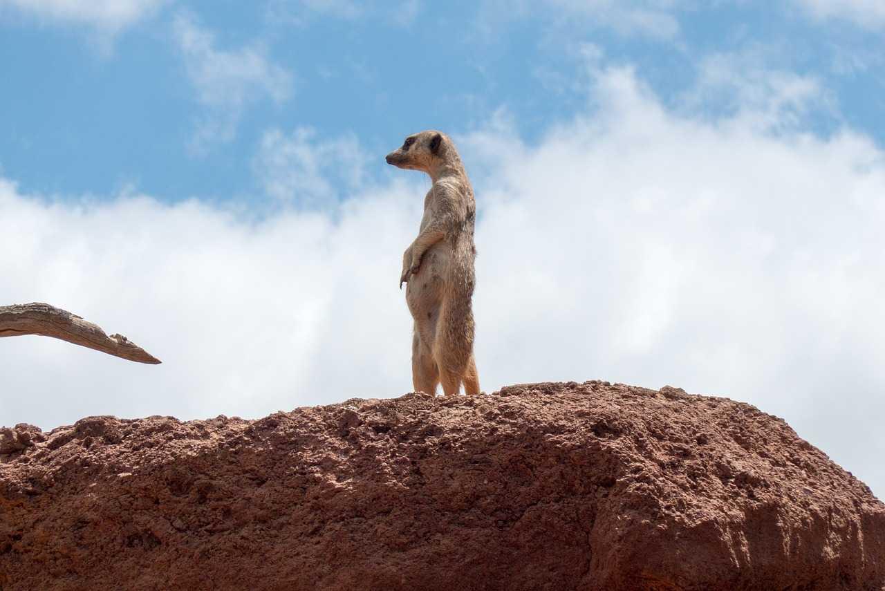 meerkat-supervisor